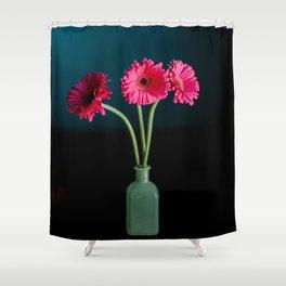 Hot Pink Gerbera Daisies in a jade vase Shower Curtain