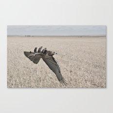 Swainson's Hawk Canvas Print