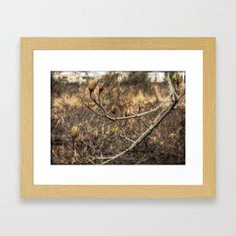 Tulip Tree Framed Art Print