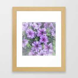 Petunia Patch Framed Art Print