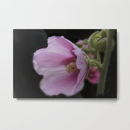 blooming on black -05- Metal Print