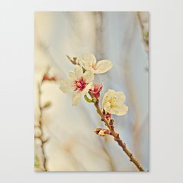Almond Blossoms in the Wind Canvas Print