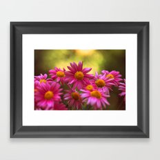 Anthemis 2632 Framed Art Print
