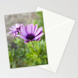 Osteospermum in Purple Stationery Cards