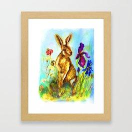 Hase auf der Wiese, Rabbit on the lawn. Framed Art Print