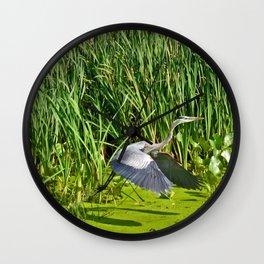 Great Blue Heron Takes Flight Wall Clock