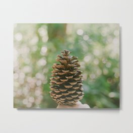 Pinecone in the Fall Metal Print