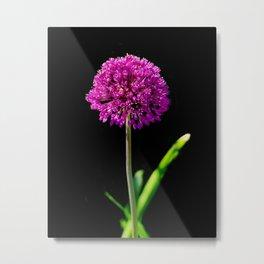Allium in art Metal Print