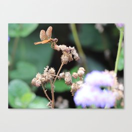 Fairies are Real Canvas Print