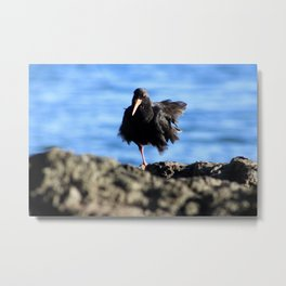 Oyster Catcher Metal Print