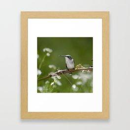 Meadow Hummingbird Art Framed Art Print
