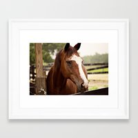 coco Framed Art Prints featuring Coco by Images by Nicole Simmons