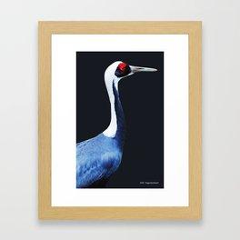 Asian White Naped Crane Framed Art Print