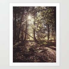 a light in the forest Art Print