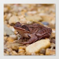 frog Canvas Prints featuring Frog by MehrFarbeimLeben