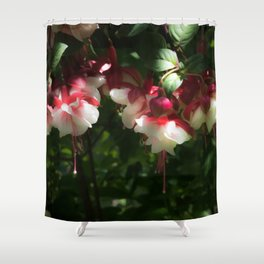 Gorgeous Fuchsias Shower Curtain
