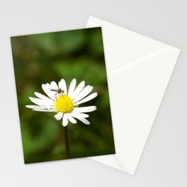 Flower Fly Stationery Cards