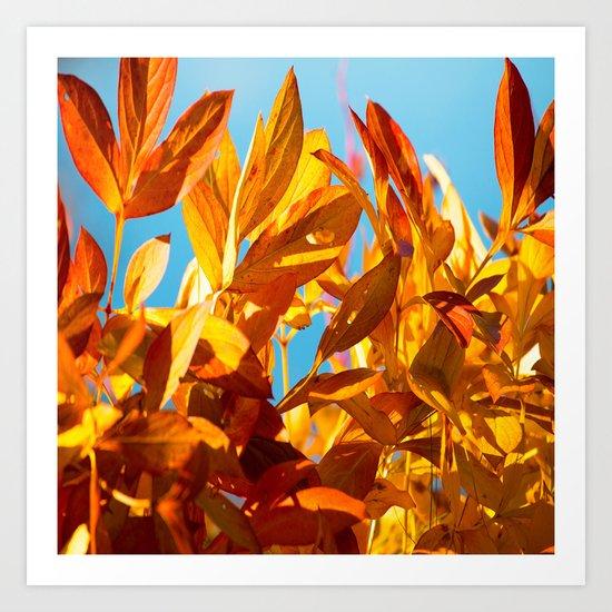Autumn colors leaves against the blue sky Art Print