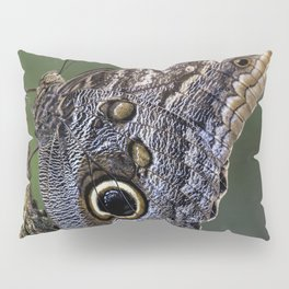 Beautiful Butterfly / 2 Pillow Sham