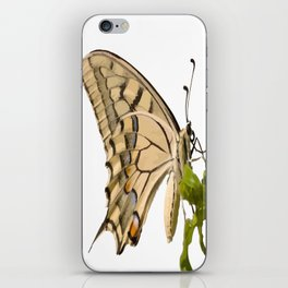 Swallowtail Butterfly Vector Isolated iPhone Skin