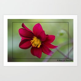 Lovely Red Art Print