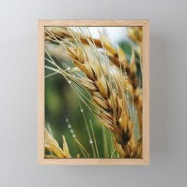 Fields of Gold Framed Mini Art Print