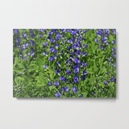 Blue False Indigo Metal Print