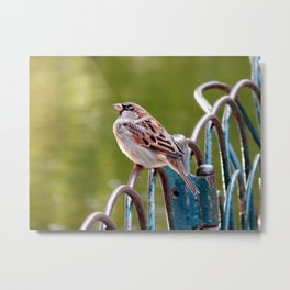 Bird on the fence Metal Print