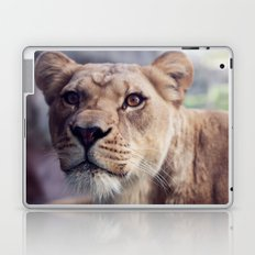 Lioness Laptop & iPad Skin