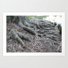 Tree Roots Art Print