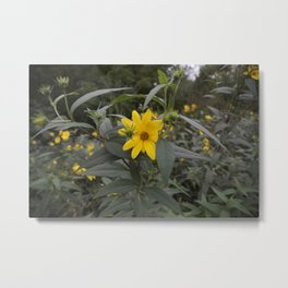 Yellow Amongst Green Metal Print
