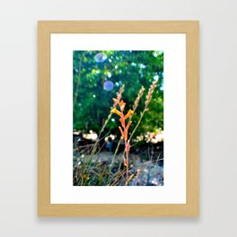 Lost in the Wind Framed Art Print