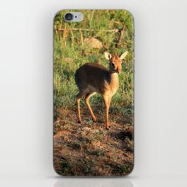 Masai Mara Dikdik Deer iPhone Skin