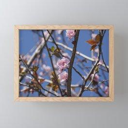 Branches of flowering Plum Framed Mini Art Print