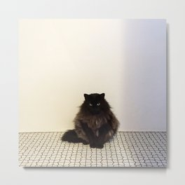 A Lone Cat  Metal Print