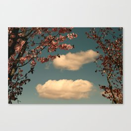 The Sky and the Cherry Trees Canvas Print