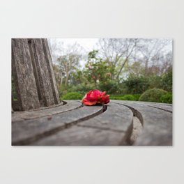 Lone Red Peony atop a Bench Canvas Print