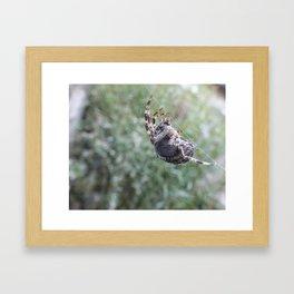 Orb Spider Framed Art Print