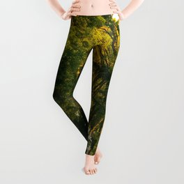 Green River Leggings