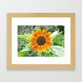 Orange Sunflower NYC Framed Art Print