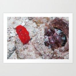 The nudi, the shrimp and the fish Art Print