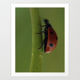 Ladybird on a Flower, macro photography, home, still life, fine art, animal love, nature photo Art Print