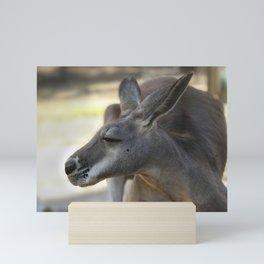 Male Kangaroo Mini Art Print