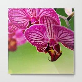 Close up Orchid #4 Metal Print