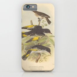 Vintage Print - The Birds of Australia (1910) - Inconscicuous Honey-Eater / Painted Honey-Eater iPhone Case
