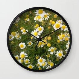 Manzanilla silvestre Wall Clock