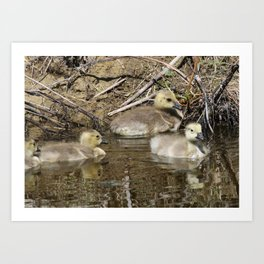 Goslings Art Print