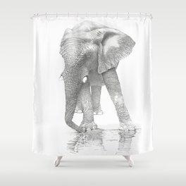 African Elephant, Loxodonta Africana Shower Curtain