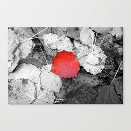 Red aspen leaf Canvas Print