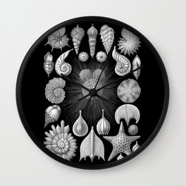 Sea Shells and Starfish (Thalamophora) by Ernst Haeckel Wall Clock